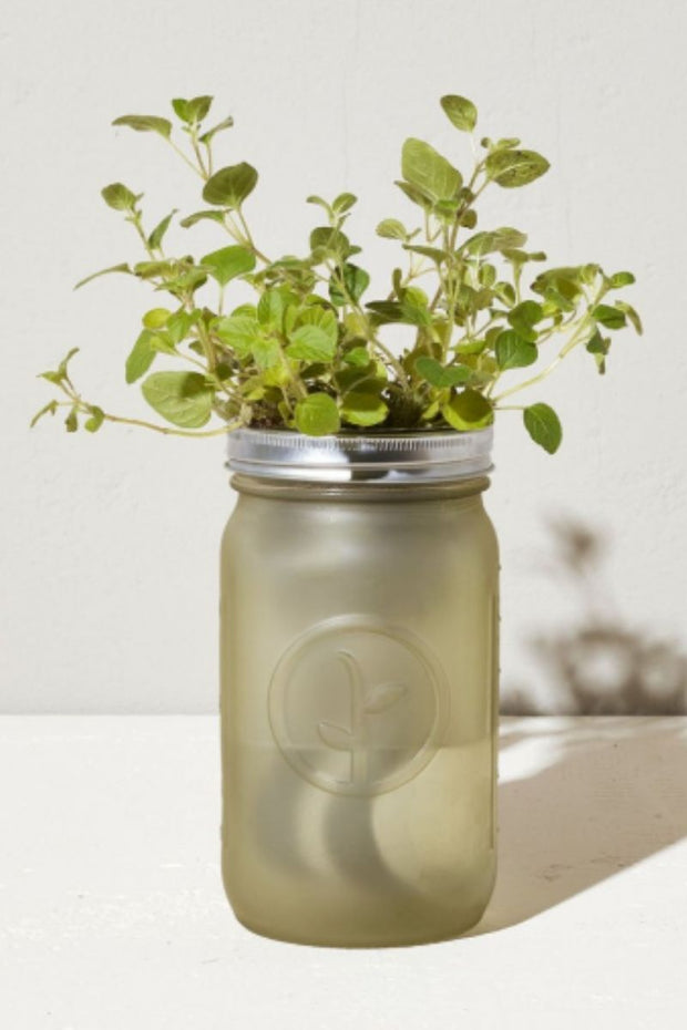 Oregano Indoor Garden Jar