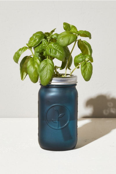 Basil Indoor Garden Jar