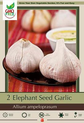 Bulb, Garlic Elephant Seed 2 Pack