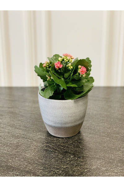 Small Moon Two-Toned Planter 4""