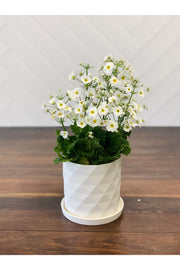 White Diamond Planter 4.5""
