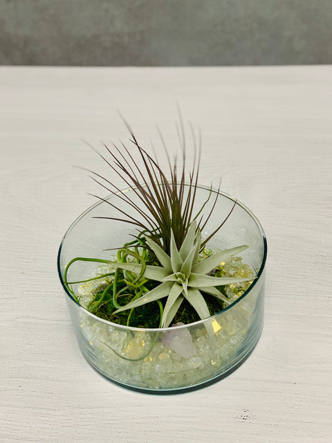 "Chalet Signature | Live Air Plant Terrarium 8"" Glass Bowl"