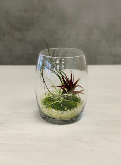 Chalet Signature | Live Air Plant Glass Terrarium