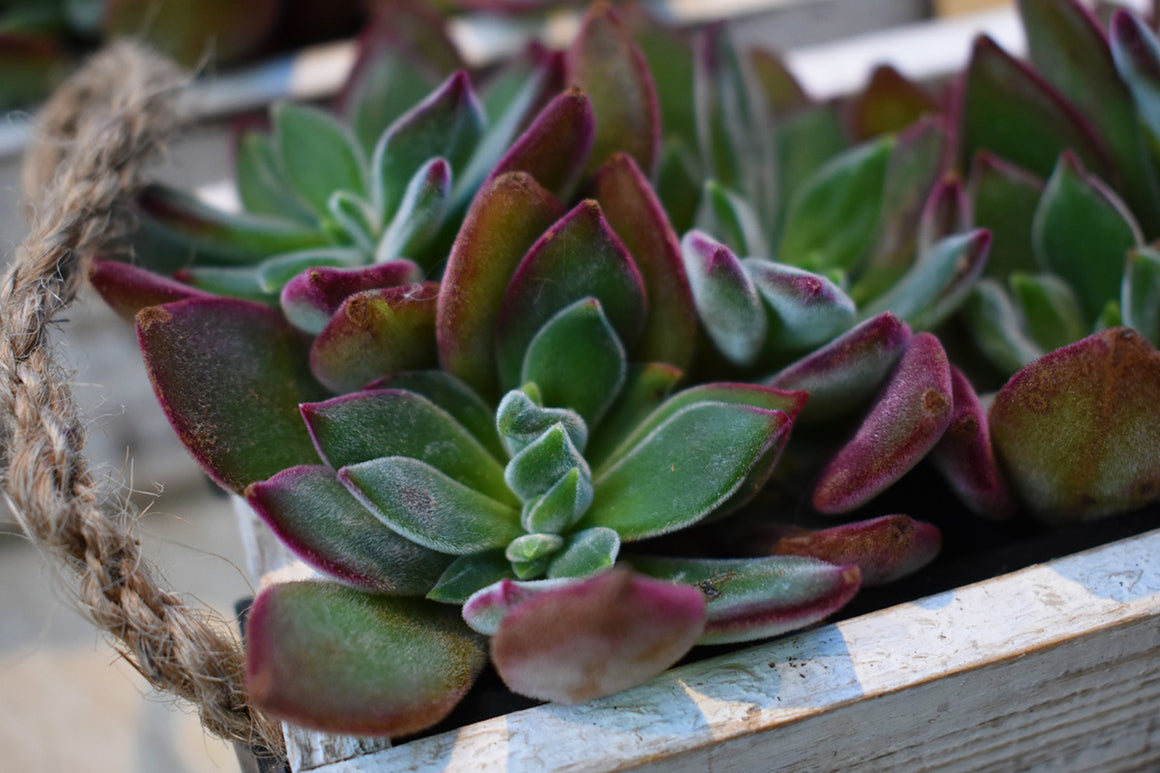 Indoor Succulents Planter Workshop (Sat 2/10)