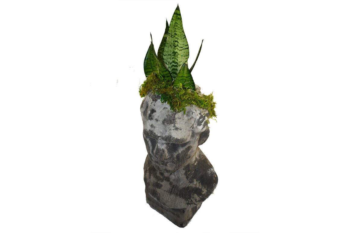 Plant Man Bust Planter for the Intellectual & Distinguished Father