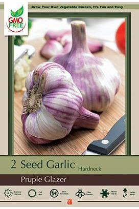Bulb, Garlic Purple Glazer