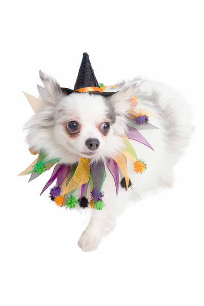 Costume, Dog Witch Hat and Collar Set