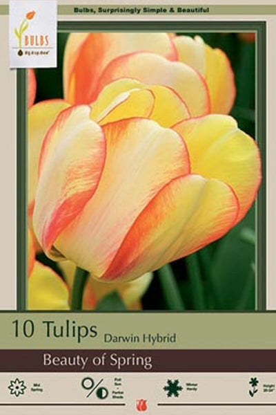 Tulip, Beauty of Spring Bulbs 10-pack