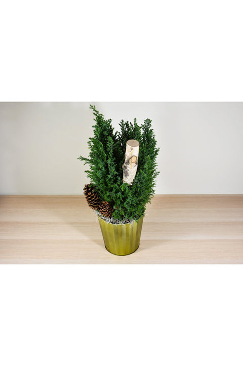 Woodland Cypress in Metallic Gold Pot