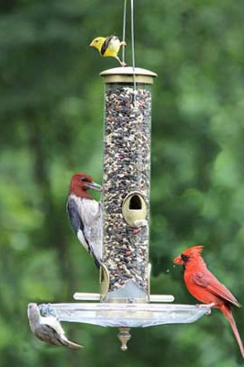 Terrific Tube Bird Feeder