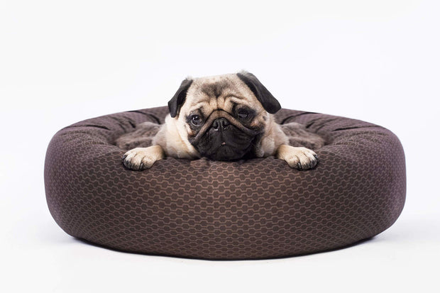 Brown Birch Dog Bed