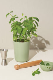 Sprout, Sip & Celebrate: Mint Bamboo Grow Kit