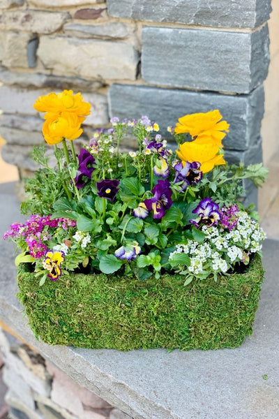 Chalet Signature | Spring | Floral Purple & Yellow Moss Basket 10""