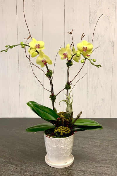 Chalet Signature | Indoor | Yellow Orchid Swirl 6.25""