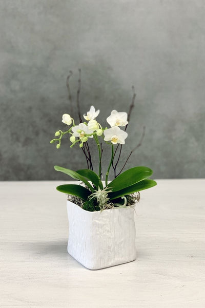 Chalet Signature | Mini White Orchid in Linen Cube 4""