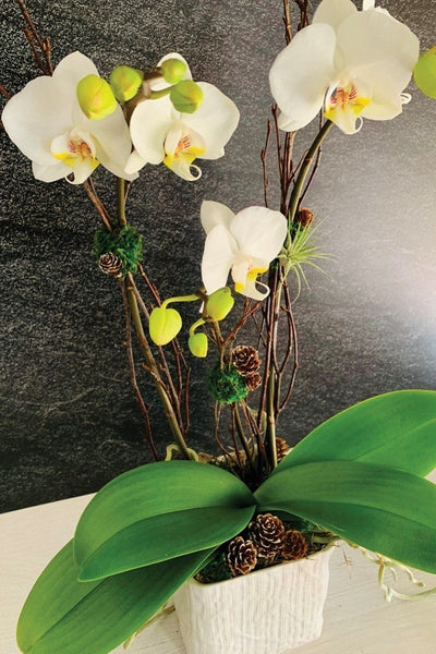Chalet Signature Orchid Arrangement