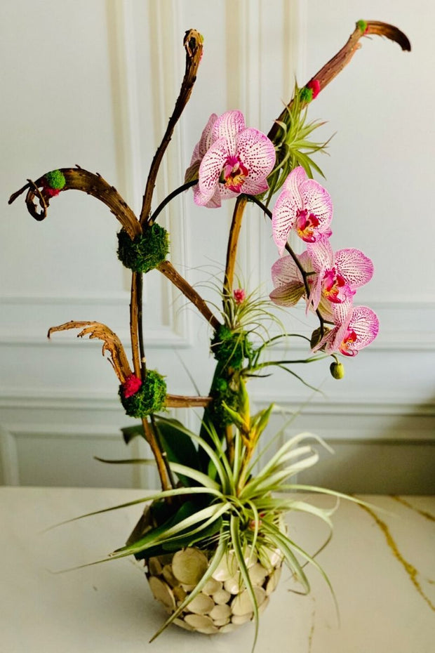 Chalet Signature | Indoor | Pastel Orchid with Air Plants