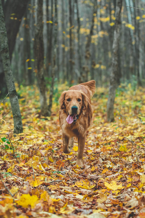 Outdoorsy Dog Subscription