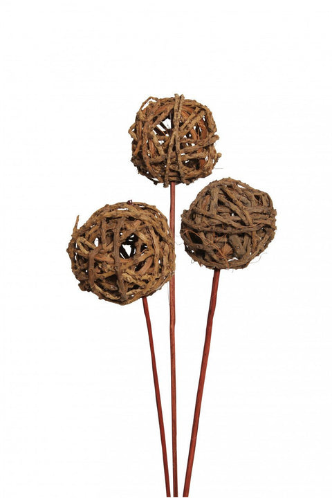 Dried Root Ball Natural 3 Stems