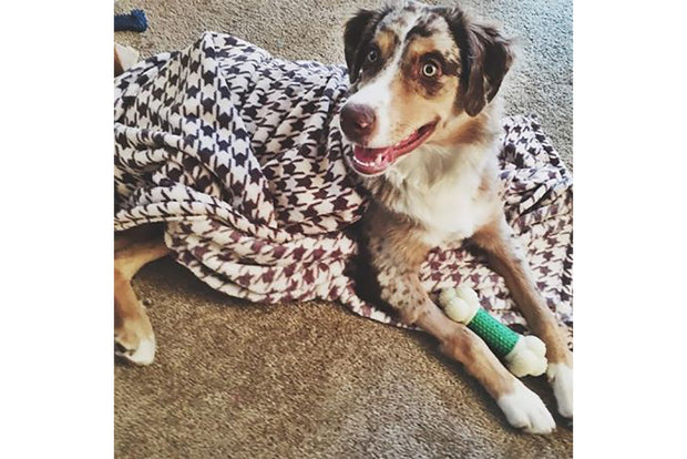 Houndstooth Dog Blanket