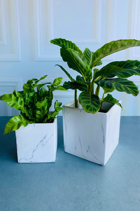 Square Marble Planter 6.5""