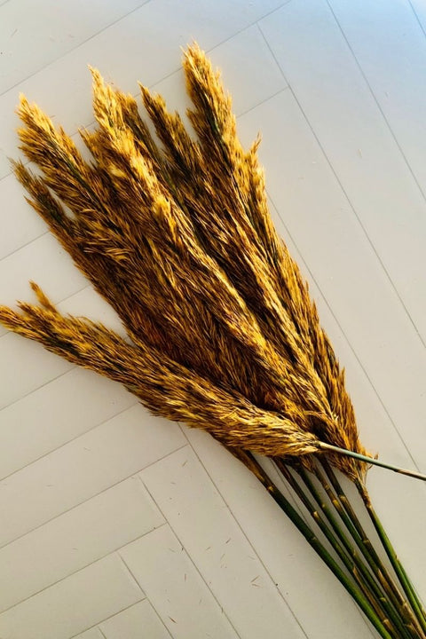 Preserved Reed Plume, Gold