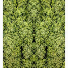 Shower Curtain:  Cannabis Shower Curtain, Marijuana Shower Curtain, Marijuana Cannabis Print, Fractal Shower Curtain