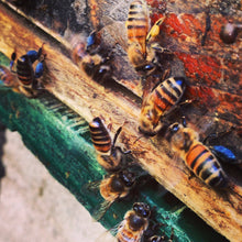 Intro to Beekeeping (classroom)