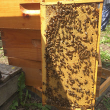 Gearing up for Beekeeping