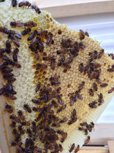 Intermediate Beekeeping (classroom)