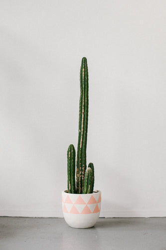 AZTEC POT PEACH