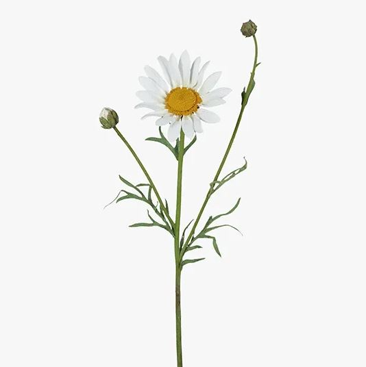 DAISY STEM - WHITE