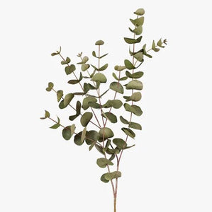 EUCALYPTUS SILVER DOLLAR STEM -  GREEN
