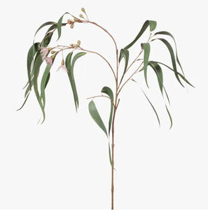 EUCALYPTUS FLOWERING LONG LEAF STEM - PINK