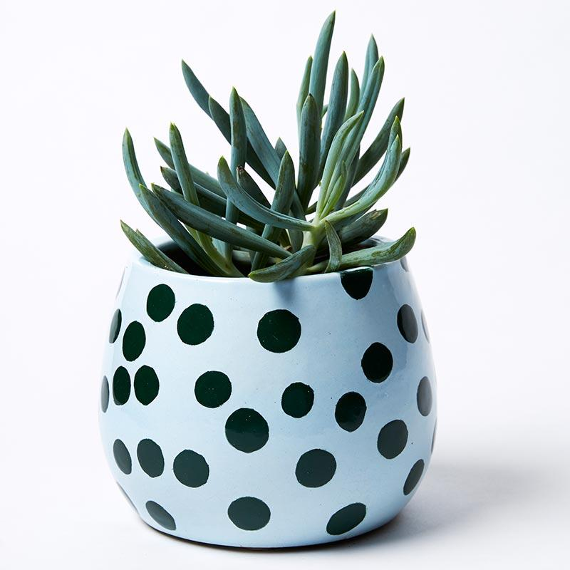 GREEN DOT PLANTER