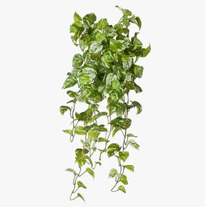 POTHOS MARBLE HANGING PLANT
