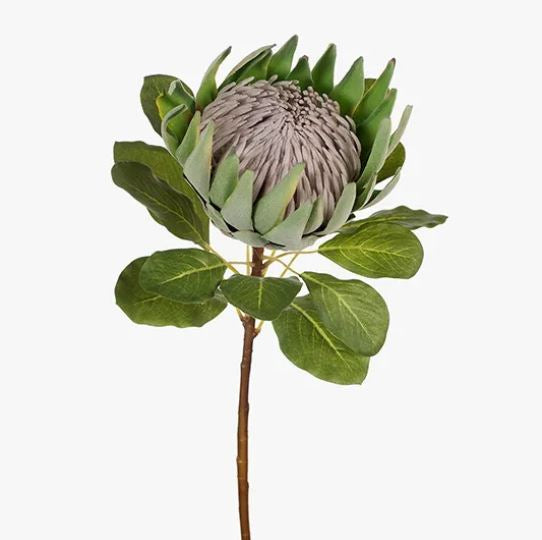KING PROTEA STEM - GREEN
