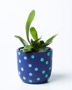 TWEED SPOT POT - NAVY/MINT