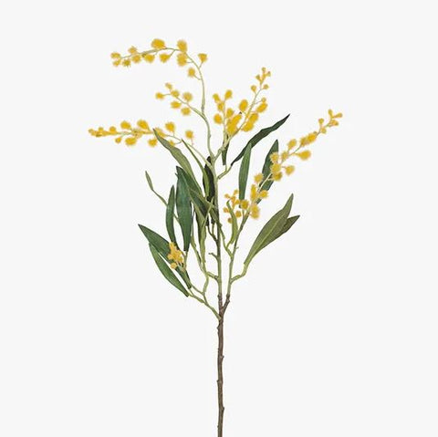 WATTLE SMALL STEM - YELLOW