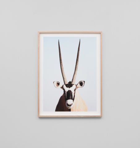 ANTELOPE FRAMED ARTWORK
