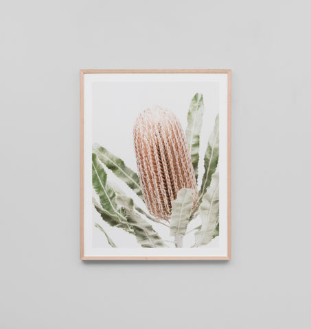 BANKSIA FRAMED ARTWORK