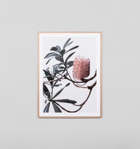 BANKSIA PORTRAIT 1 FRAMED ARTWORK