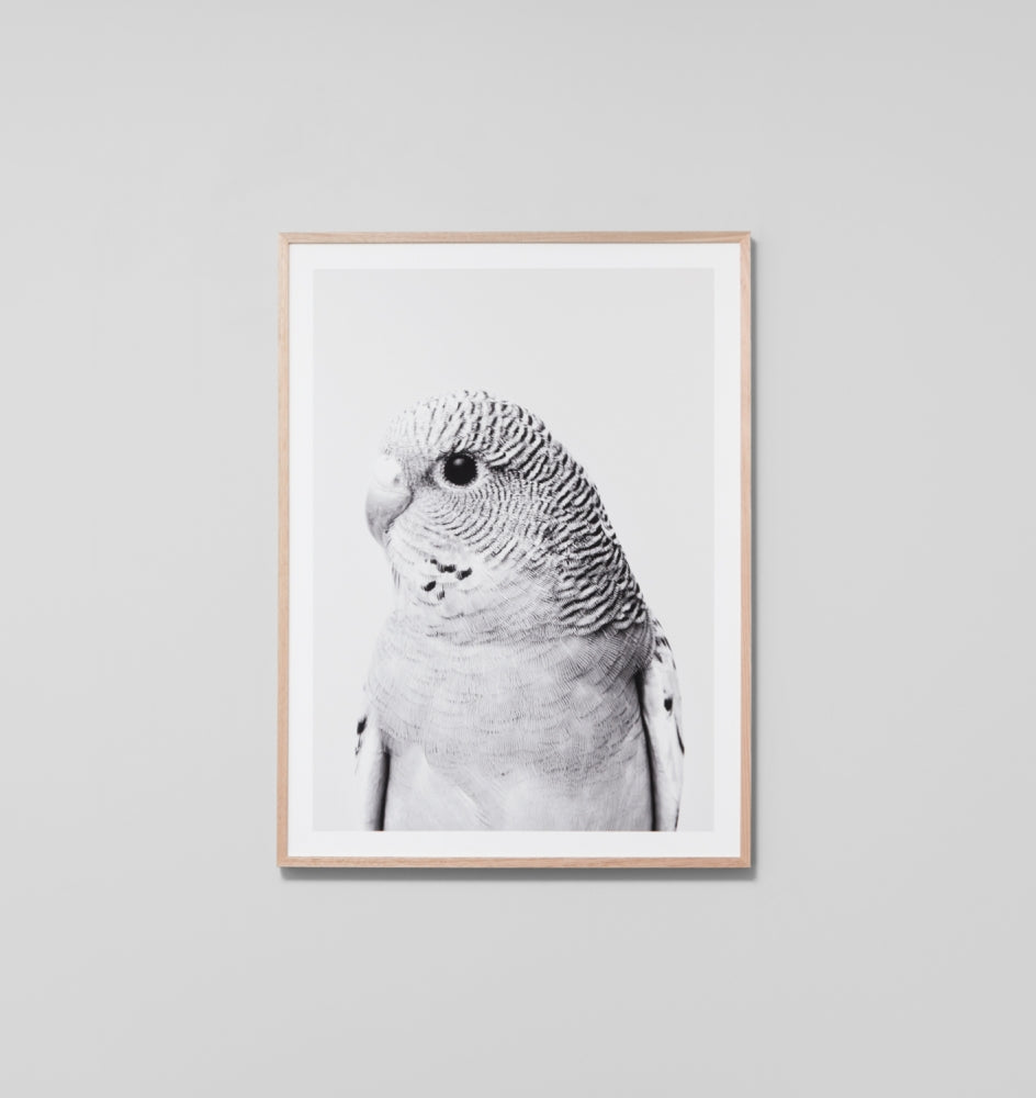 GREY BUDGIE FRAMED ARTWORK