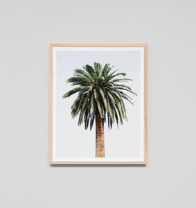CARIBBEAN PALM COLOUR FRAMED ARTWORK