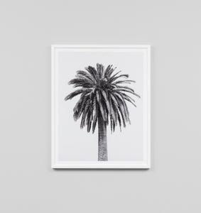 CARIBBEAN PALM BLACK & WHITE FRAMED ARTWORK