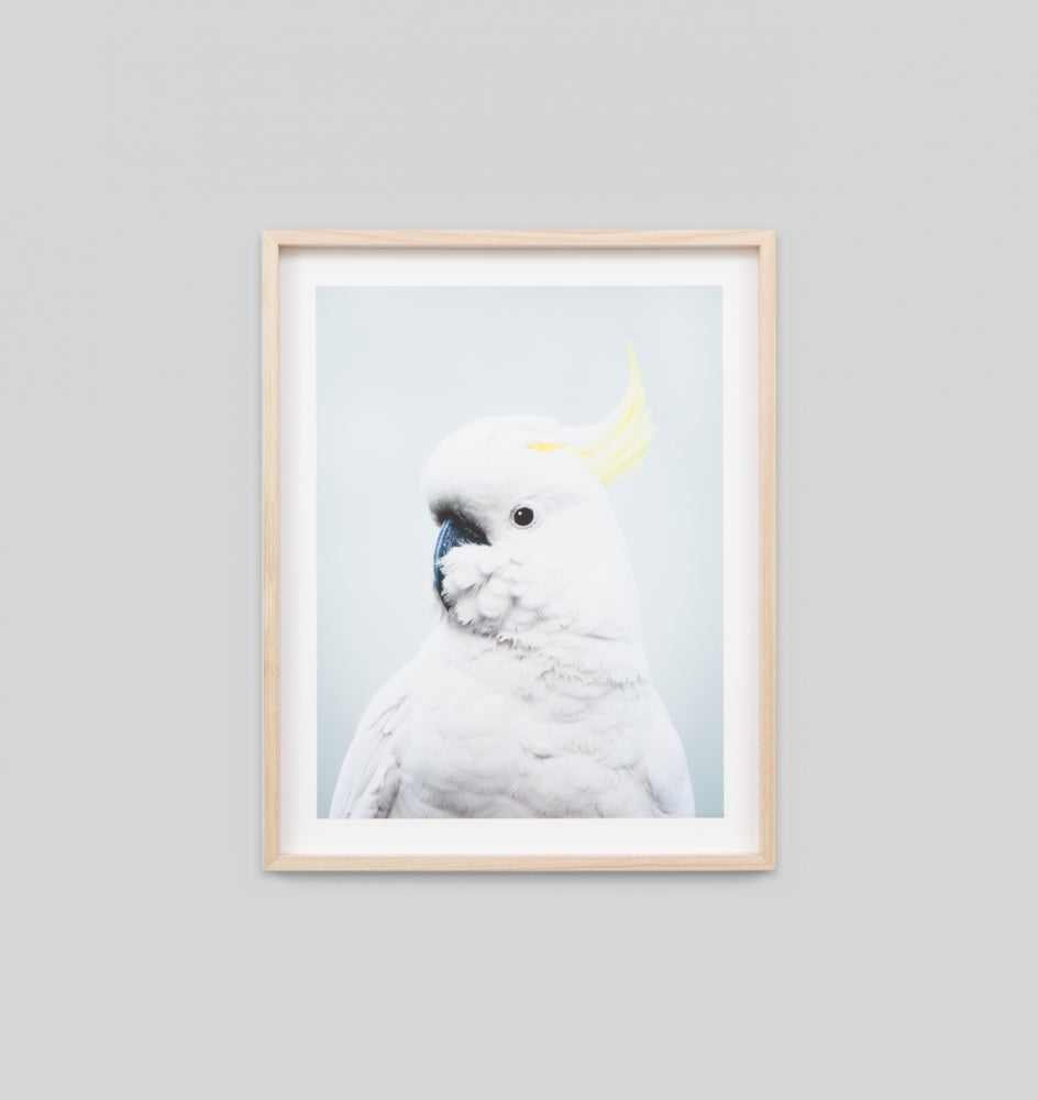 COCKATOO BLUE FRAMED ARTWORK