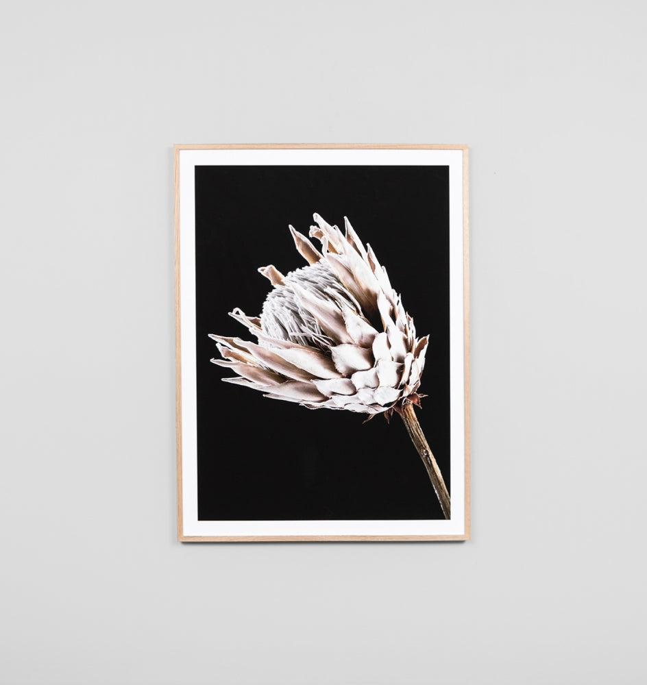 DUSTY PINK PROTEA FRAMED ARTWORK