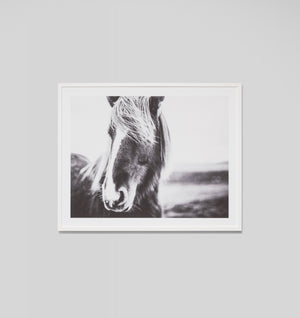 EQUINE BLAZE FRAMED ARTWORK