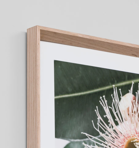 EUCALYPTUS FLOWER 2 FRAMED ARTWORK