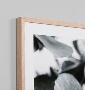 EUCALYPTUS STEM FRAMED ARTWORK